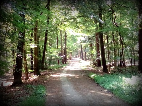 Forest Path Groesbeek Netherlands