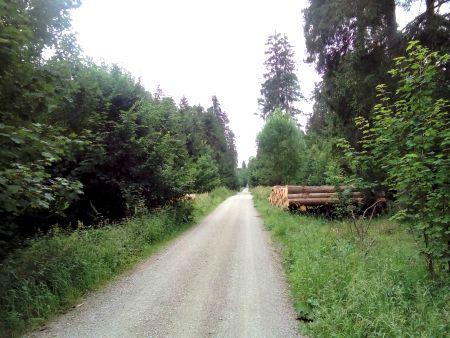 Ebersberger Forest