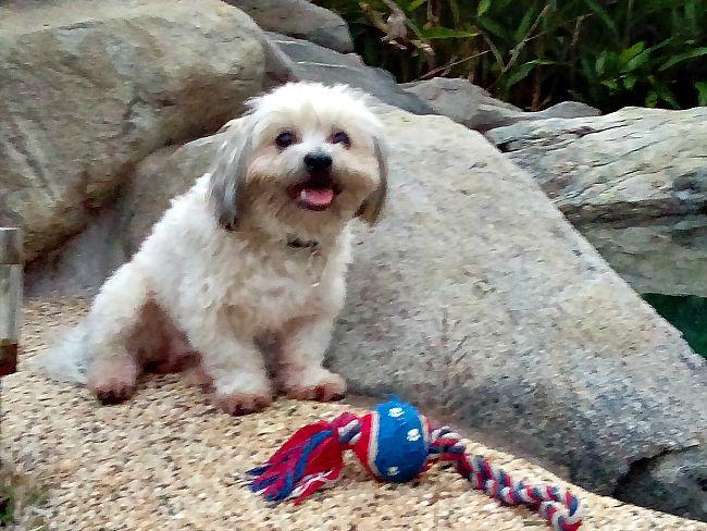Cairns Australia Teddy