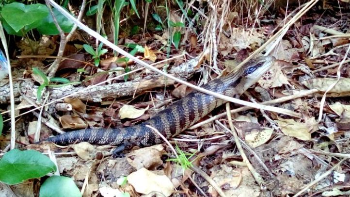 Australia New South Wales Sydney Manly Quarantine