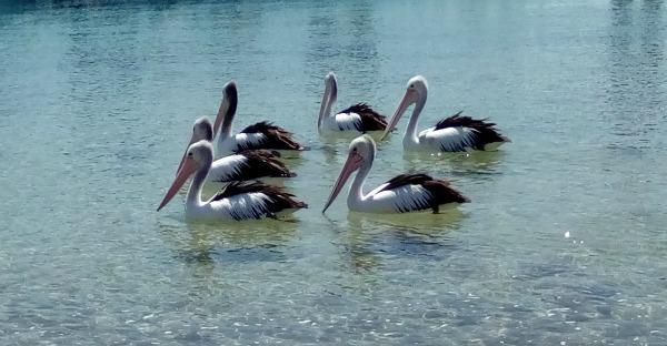 Phillip Island Melbourne Victoria Australia JWalking