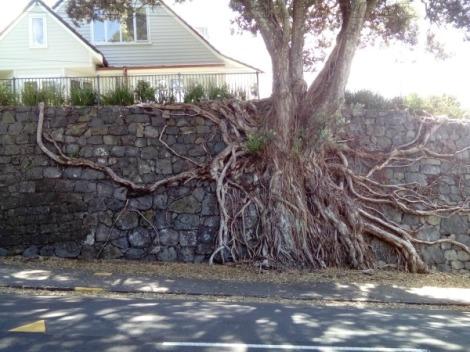 Auckland Tree