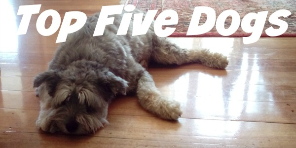 JWalking Top Five Dogs