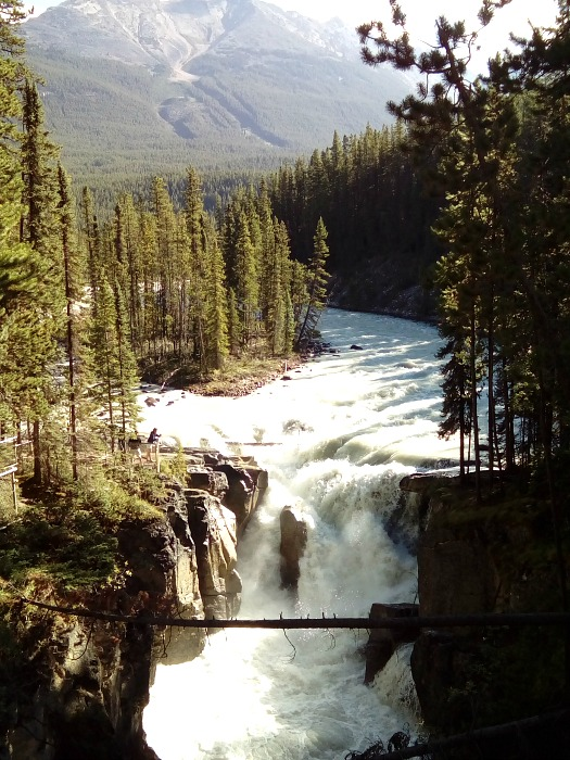 The wild and wonderful Sunwapta Falls