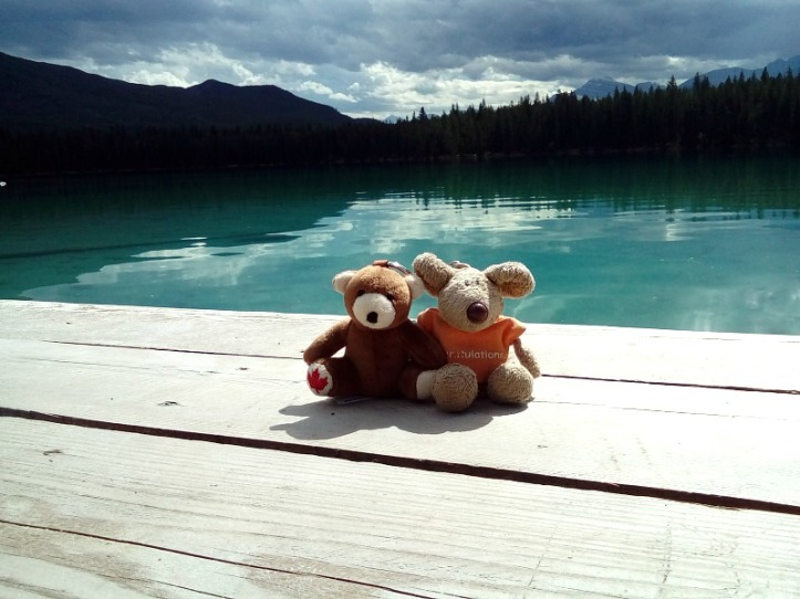 "Welcome to the family Banff Bear (a friend for ""old faithful"" Brumby Bear)"