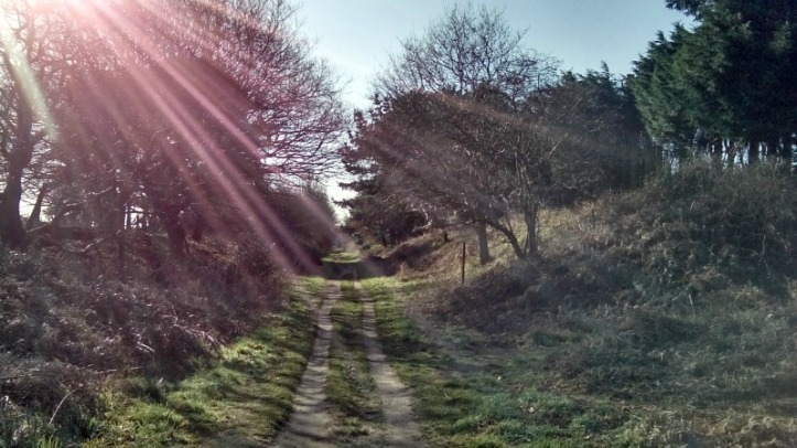 The walk from Aldeburgh to Thorpeness through the local nature reserve