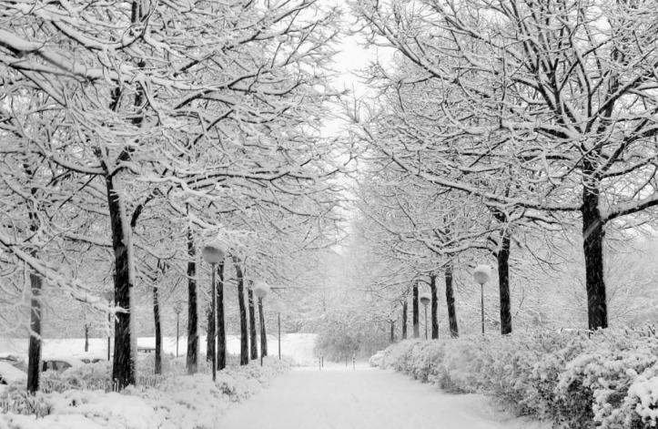 Missmas Snow