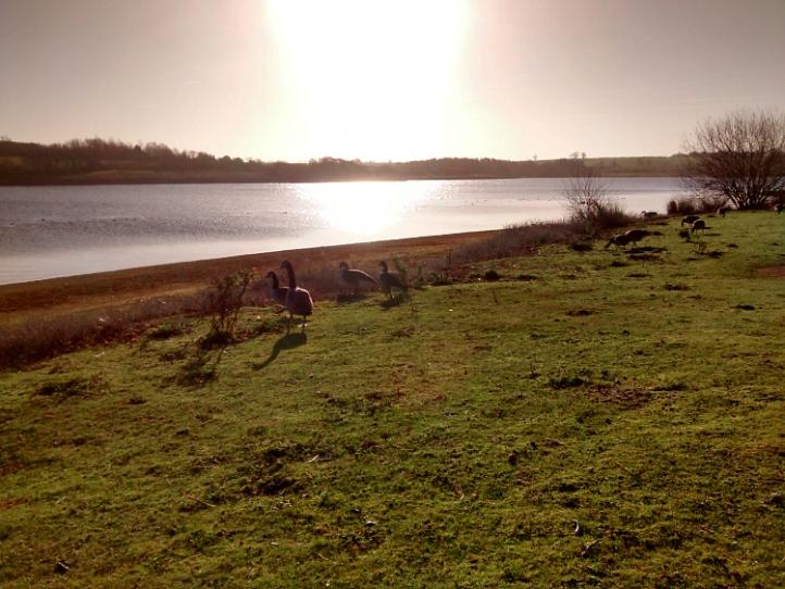 Pitford Water