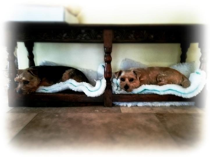 Cheriton Dogs