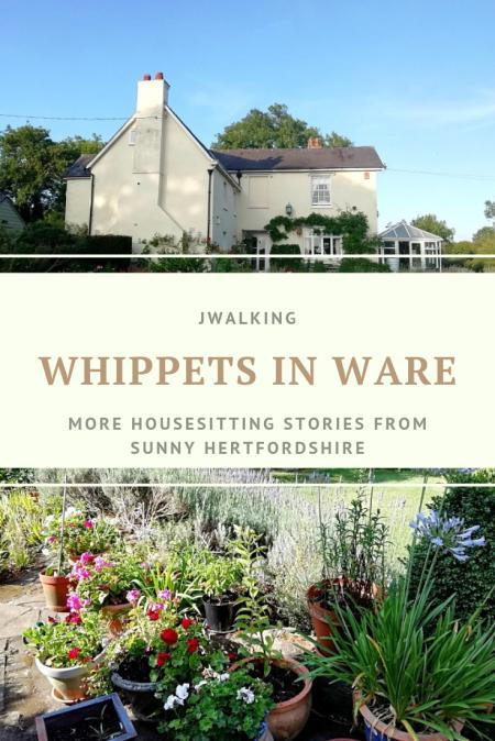 Housesitting in Ware