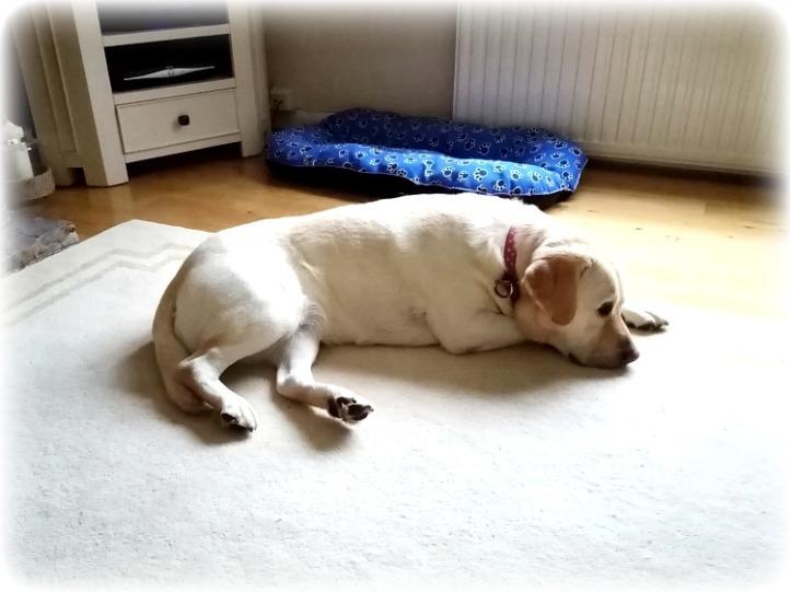 Barns Green Dog