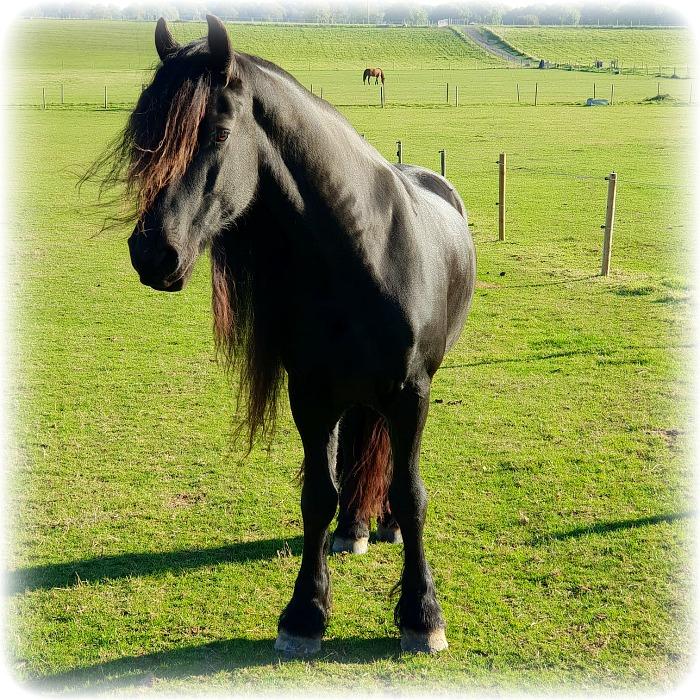 Jay Horse