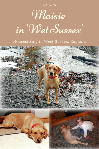 Hosuesitting Maisie in West Sussex england