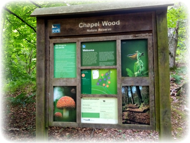 Chapel Wood RSPB Spreacombe