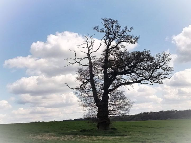 Burnham Green