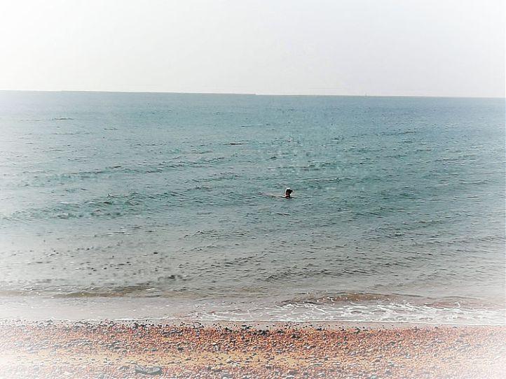 Hove Sea Swim